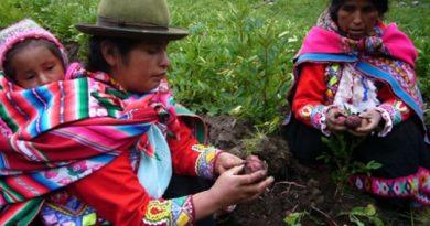 Regina Illamarca y Natividad Pilco, dos mujeres indígenas de los Andes de Perú, que como muchas son preservadoras de las semillas nativas de su región. Crédito: Milagros Salazar/IPS